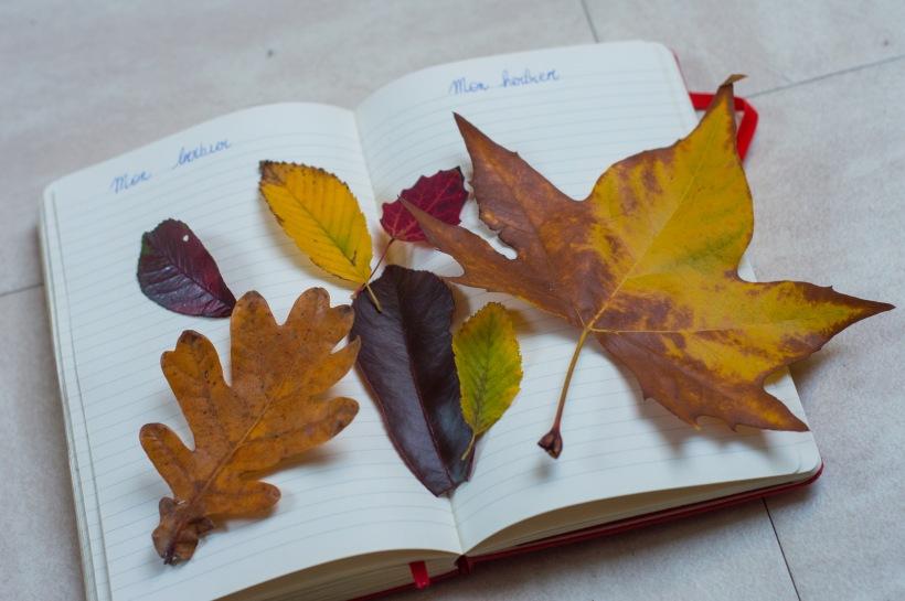 mon herbier maison, automne