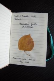 mon herbier d'automne