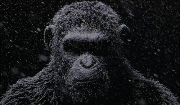 planete-singes-suprematie.jpg