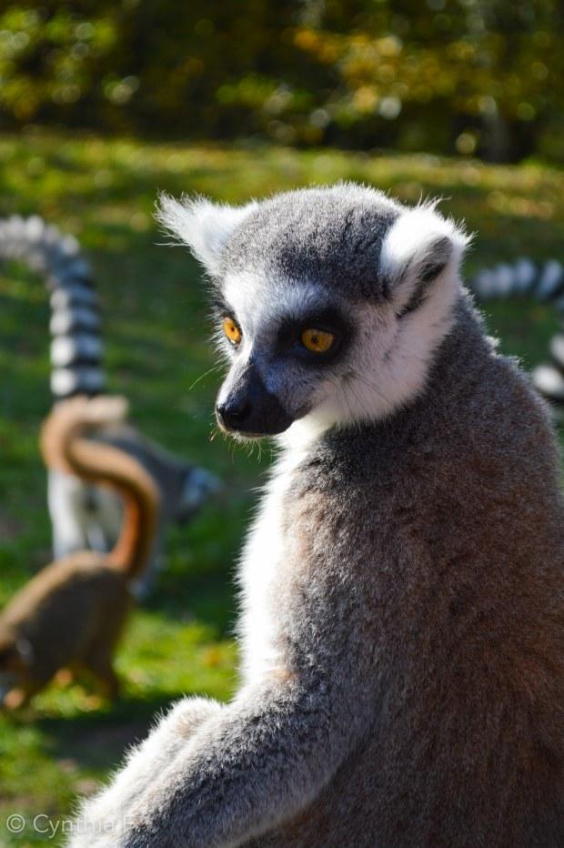 ile aux lemuriens1