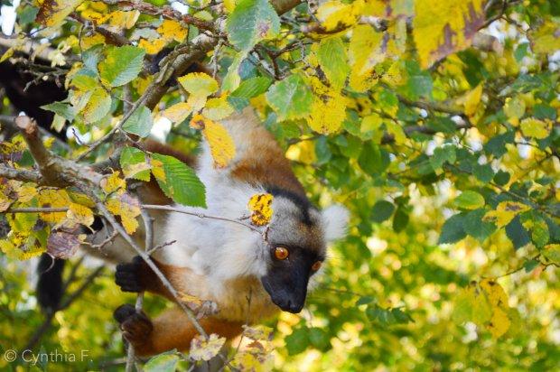 ile aux lemuriens2
