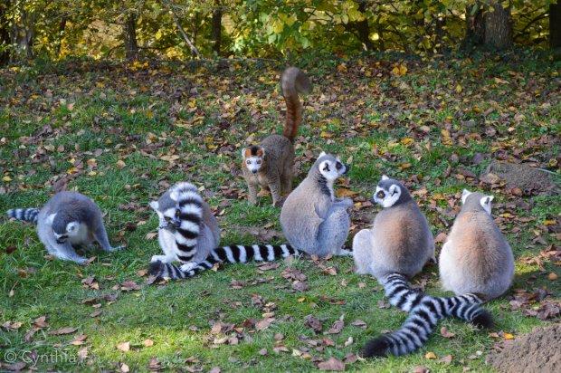 ile aux lemuriens3