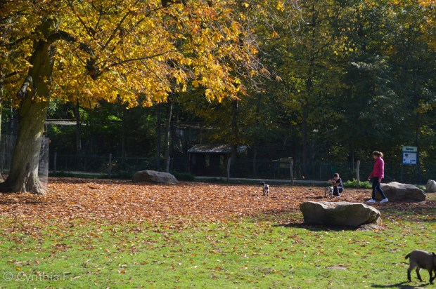 parc des félins1