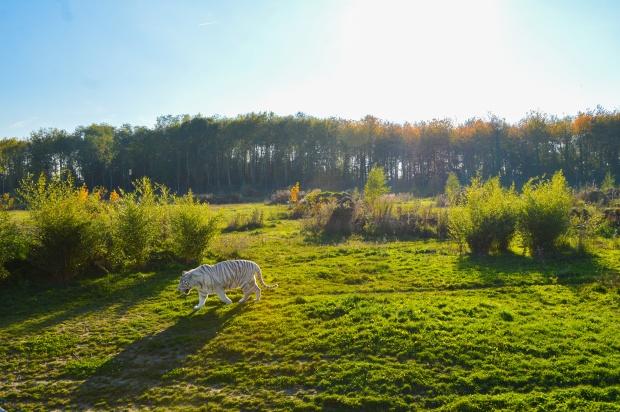 parc des félins6