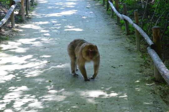 terre de singes8